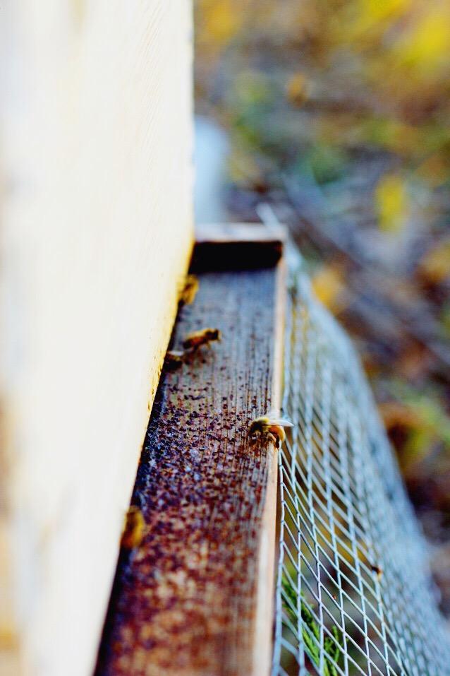 beekeeping, harvesting honey, finding beautiful truth