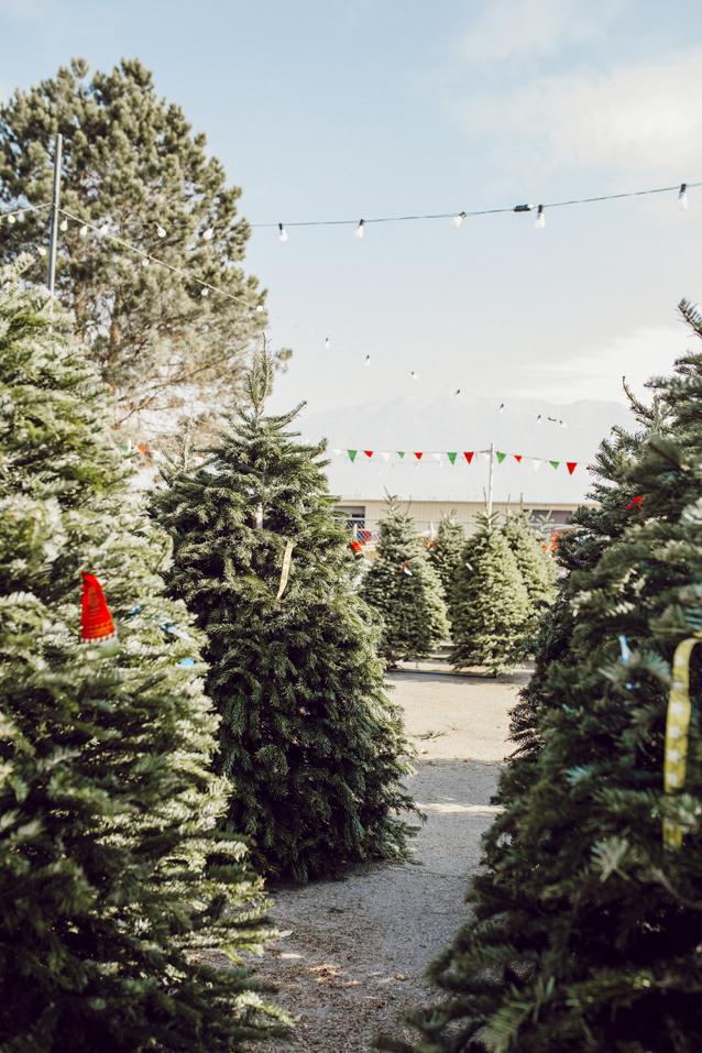 Charleston Christmas Lights
